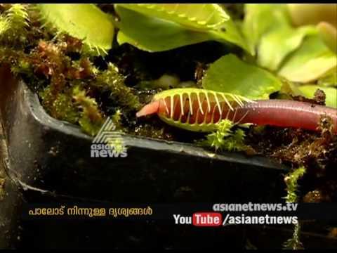 Flesh-eating plant  |Asianet News Lens