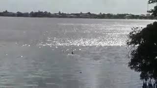 ACUSADO DE ROUBO PULA NO RIO