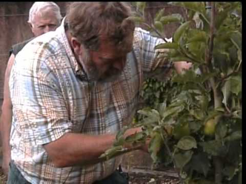 How to Summer Prune Your Fruit Trees with Kevin Croucher
