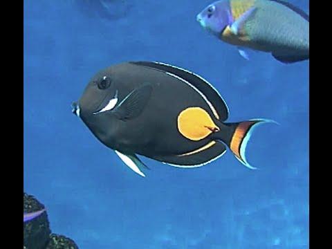 有人在海裡找到這隻「完全透明的小魚」,本來以為是新品種沒想到竟然是大家都熟知的這種魚!