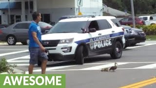 カモの母子が道路を渡れるよう見守るパトカーと警官が手助け