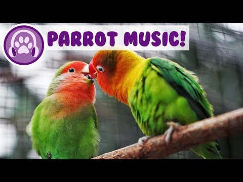 Relaxing Music for Parrots! Calm Your Bird and Help them Sleep!