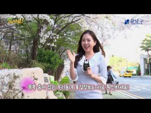 고고강남으로_봄을 알리는 벚꽃 속으로