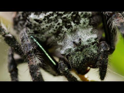 Spider Shoots 25 Metre Web