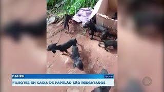 Dez filhotes de cães são abandonados em estrada rural de Bauru