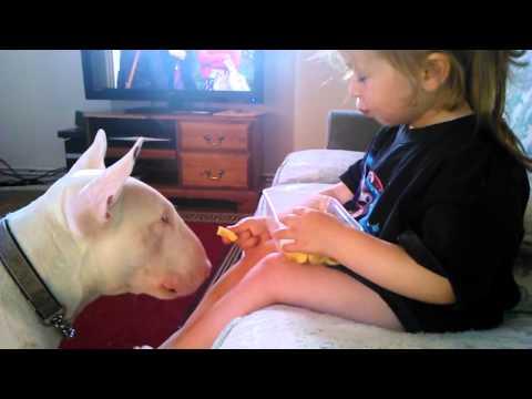 il bull terrier e la bambina