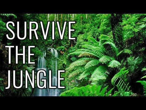 Video How to Survive the Jungle - EPIC HOW TO download in MP3, 3GP, MP4, WEBM, AVI, FLV January 2017