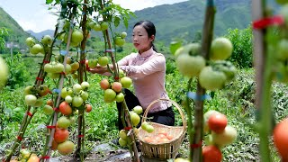 Tomatoes in Chinese cooking