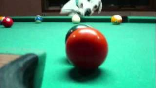 dog play snooker.mp4