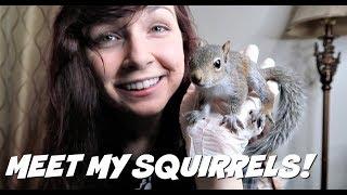 MEET MY SQUIRRELS?! | Baby Squirrels | Wildlife Rehabilitation by Maddie Smith