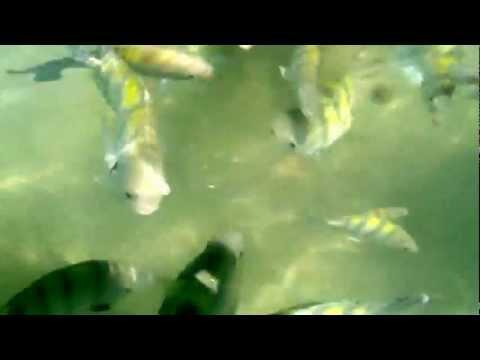 Tratando dos peixinhos em Paripueira