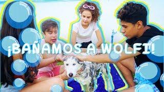 Video ¡¡¡BAÑAMOS A WOLFI!!! | DosogasTeam KIDS MP3, 3GP, MP4, WEBM, AVI, FLV Juni 2018