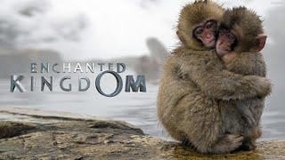 Nonton Bbc Earth Enchanted Kingdom Trailer Film Subtitle Indonesia Streaming Movie Download