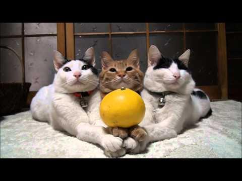 我們是橘子三結義,會一直在一起的!!