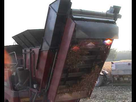 Corn cobs harvesting