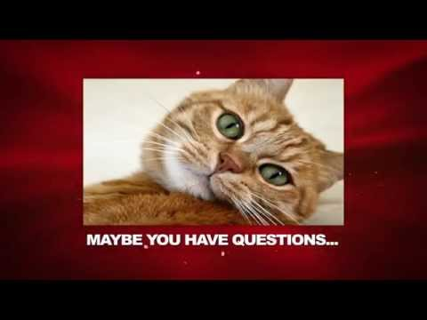 6 things your cat is trying to tell you