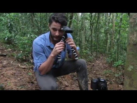 How Not to Camera Trap in the Amazon Rainforest