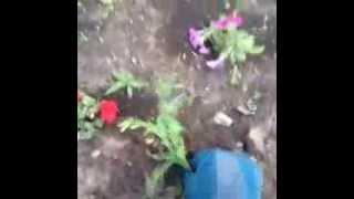 How to Plant a Beautiful Garden Punjabi Vines