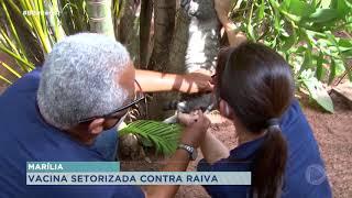 Marília realiza campanha de vacinação contra raiva na zona rural