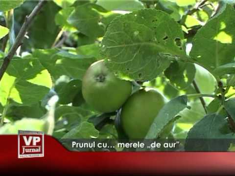 Prunul cu… merele de aur