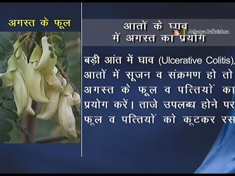 Ayurvedic Benefits of August Tree for Ulcerative Colitis