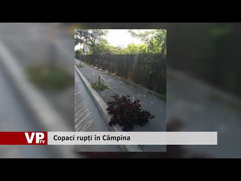 Copaci rupți în Câmpina