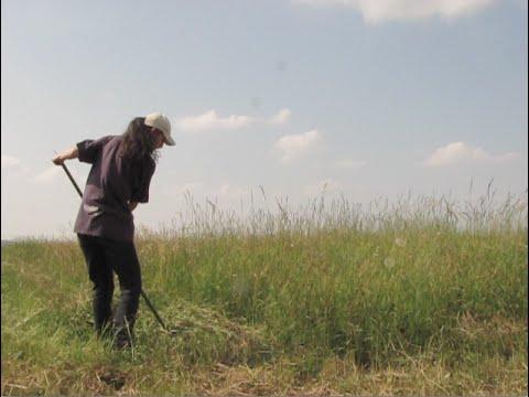 Usare la Falce per tagliare l'erba come una volta