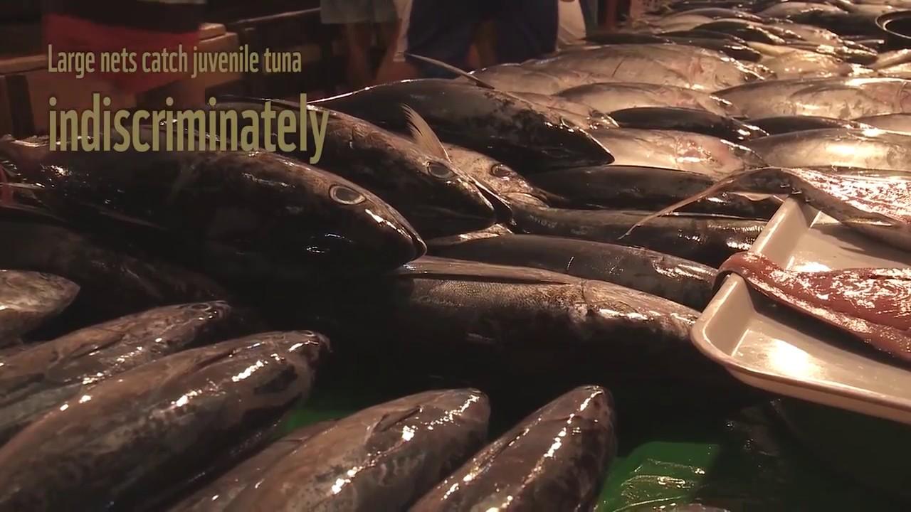 Βιώσιμος τόνος από τις Φιλιππίνες για την Ευρώπη