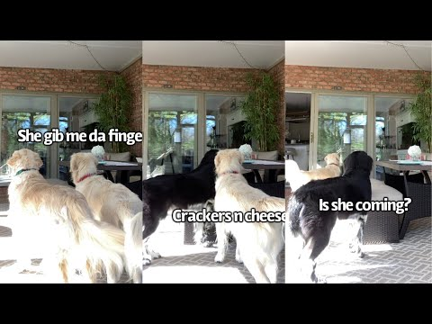Will My Dogs Steal My Snacks Off The Table видео
