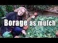 Raised Bed Reboot | Borage Mulch | VlogRaised Bed Reboot | Borage Mulch | Vlog<media:title />