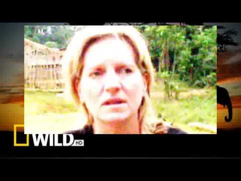 tribal Wives the Babongo Gabon Series Two Episode Two Part 01