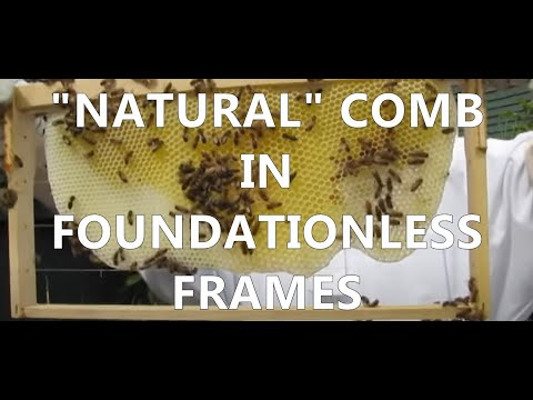 mudsongs.org: Inspecting Foundationless Frames
