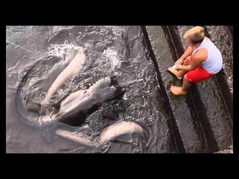 這個小男孩竟然在河裡釣到這種生物........還變成寵物!