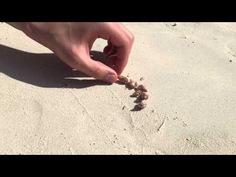 People On The Beach Help Homeless Hermit Crab Find A New