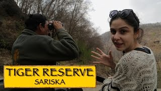 Sariska India  City new picture : Sariska Tiger Reserve || Jaipur