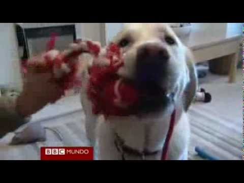 Perros guía para niños sordos