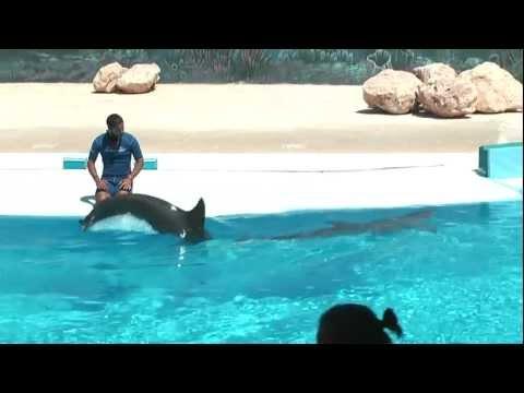 Málta 2011 – Delfin show 1.