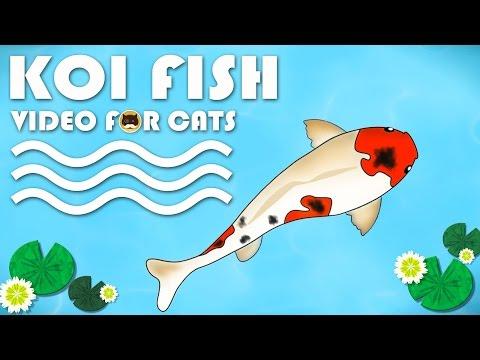 Fishcat Video Watch Hd Videos Online Without Registration