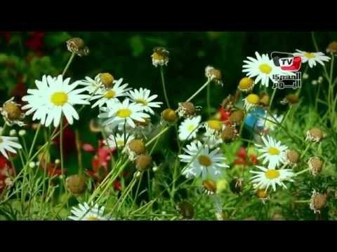 معرض الزهور في الربيع: «يا بدع الورد»