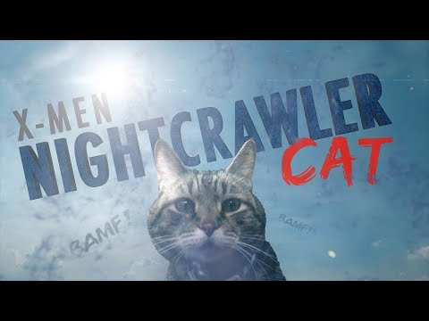 Nightcrawler Cat
