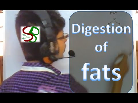 Human physiology lecture - fat digestion