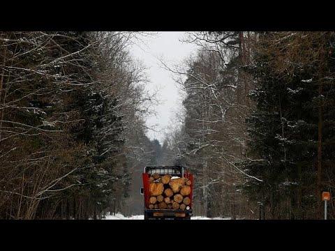 Polen droht Niederlage vor EuGH: 150.000 Urwald-Bäume ...