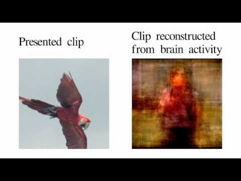 UC Berkeley scientists reconstruct perceived videos, based on brain activity