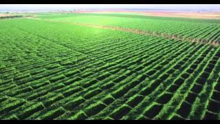 GOODLAND GLOBAL FARM INC MEXICO(BITTER MELON)