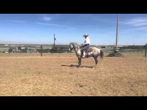 Del April Video - Horse for Sale
