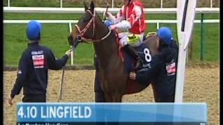 HnR 's  Living the Life wins Handicap Lingfield Feb 28 2014