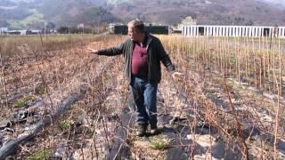 #572 Kooperation in der Pflanzenzüchtung - Lubera & East Malling