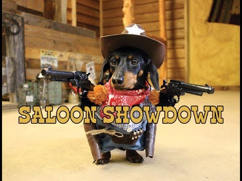 Crusoe the Cowboy Dachshund s Saloon Showdown