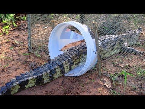 Creative Boy Makes Crocodile Trap Using Buckets & Net - How To Make Crocodile Trap Work 100%