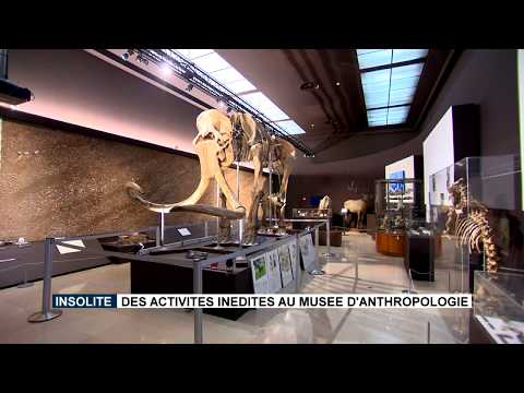New activities at the Museum of Anthropology